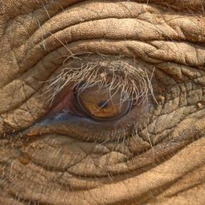 Thailand 2015: Elefanten und Meer